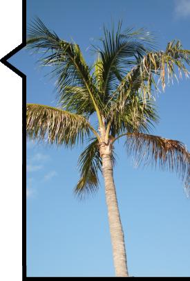 Palm Tree Carribean